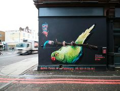 om pom masai parakeet in camden an awareness project with Synchronicity Earth and IUCN